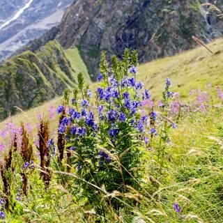 اعشاب ونباتات تنمو في الجبال