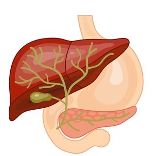ما هو سرطان القناة الصفراوية؟