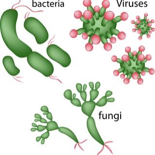 العدوى