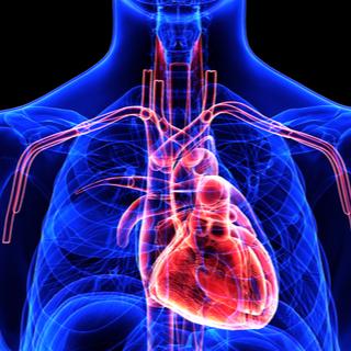 تحسن وظيفة الدورة الدموية