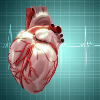 وظيفة العضلة القلبية