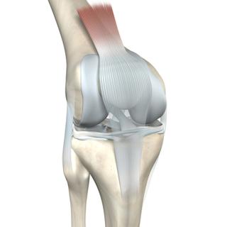 أجزاء مفصل الركبة