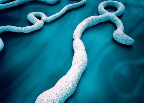 فيروس الايبولا
