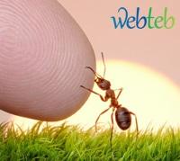 لسعات البعوض والحشرات: