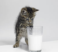 علاج حساسية الحليب - هل من حلول؟