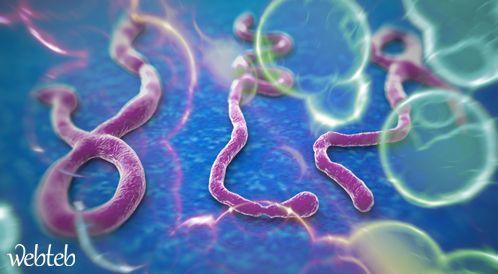 فيروس الإيبولا Ebola: هل هو التهديد القادم؟