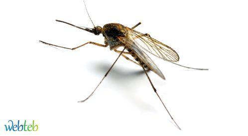 اليوم العالمي للملاريا: السبب الرئيسي للوفاة في العالم