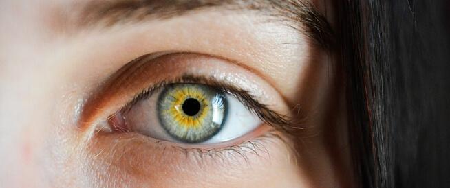ذبابة العين الطائرة (عوامات العين): أهم المعلومات