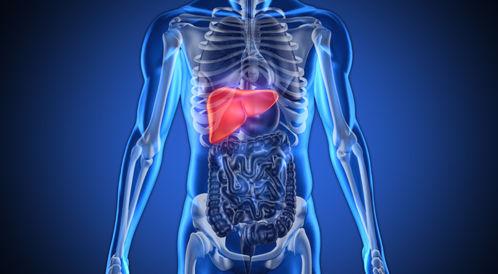 اليكم أهم الأسئلة والإجوبة حول زراعة الكبد