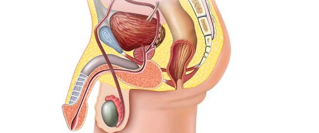 سرطان البروستاتا في 12 سؤال