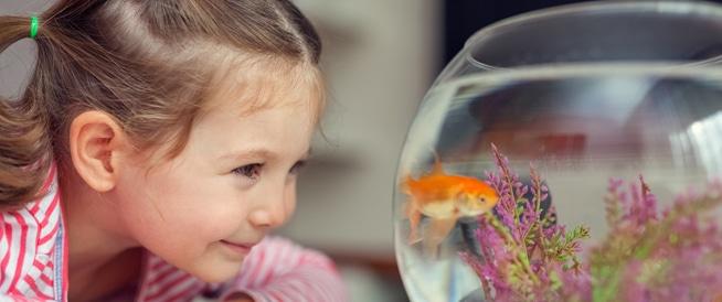 سكري الأطفال: هكذا يساعد الحيوان الأليف في علاجه!
