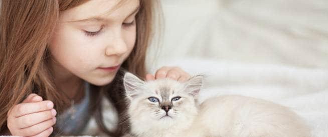 تربية القطط قد تصيب طفلك بالغباء