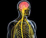 السكري والجهاز العصبي