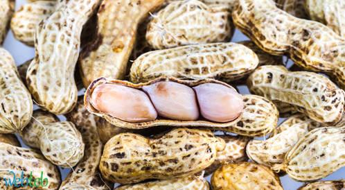 هل اطعام الفول السوداني للطفل سيجنبه الاصابة بالحساسية؟