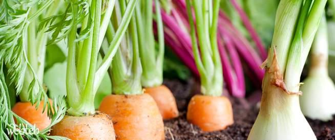 الغذاء العضوي- دليل للمستهلك الحكيم