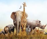 الحيوانات الخطيرة