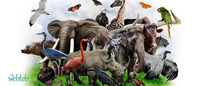 ما هي أكثر الكائنات الحية التي تقتل الإنسان سنوياً؟