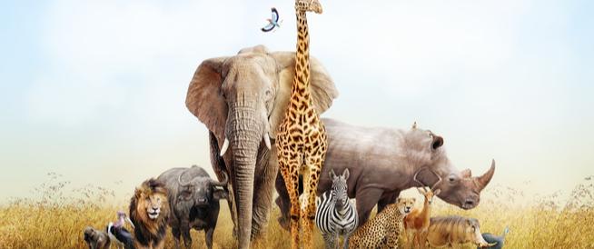 أكثر الحيوانات التي تقتل الإنسان سنوياً