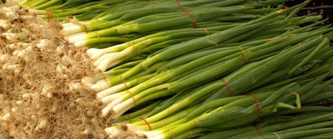 البصل الأخضر: فوائد عديدة للمناعة وأكثر!