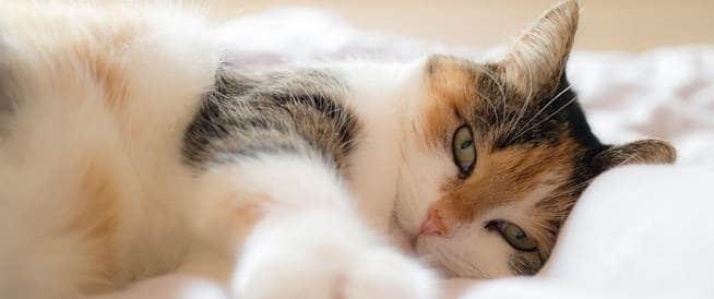 حساسية القطط: ما هي أسبابها وكيف أحاربها؟