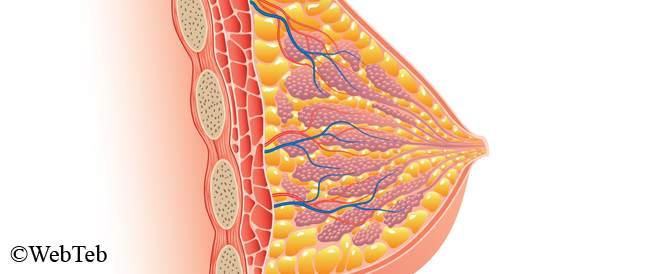 أنسجة الثدي عالية الكثافة: ماذا يعني ذلك؟
