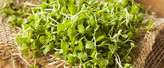 الإنباتات المصغرة: أكثر فائدة من  الخضار الناضجة؟