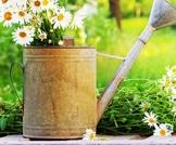 زهور الحديقة لعلاج أمراض خطيرة