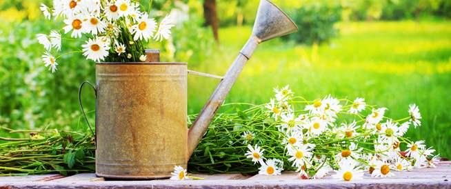 زهور في حديقتك تستعمل في صناعة أدوية وعلاجات هامة