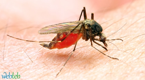 دليل وسائل مكافحة البعوض