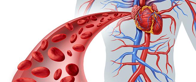 طرق قد تساعدك في زيادة كريات الدم الحمراء