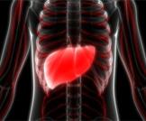 أكياس الكبد