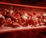 الدم في الجسم