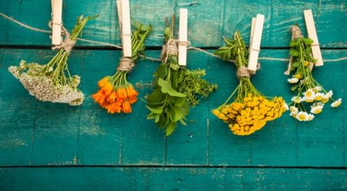 7 من أهم المضادات الحيوية الطبيعية