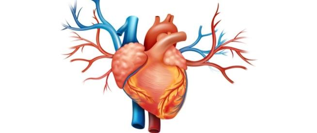 23 حقيقة ستفاجئك عن القلب