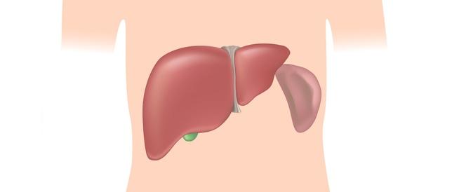تضخم الكبد والطحال: ماذا يجب أن تعرف؟