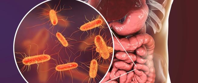 ما هي البكتيريا الجيدة وأهميتها في الجسم؟