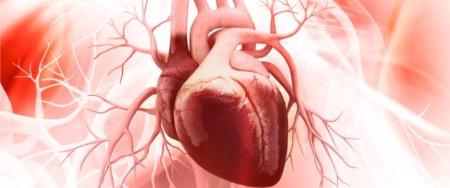 كيف يعمل القلب؟ كافة التفاصيل من هنا!