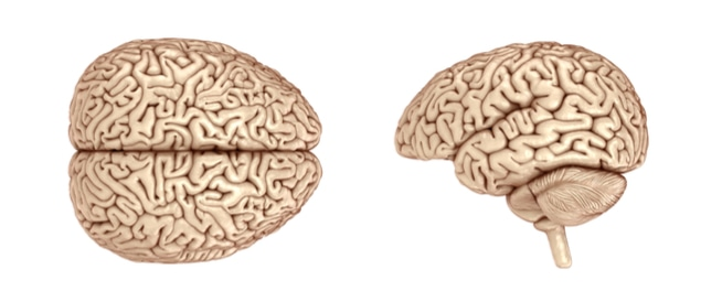 الدماغ: إليك ما تجهله عنه