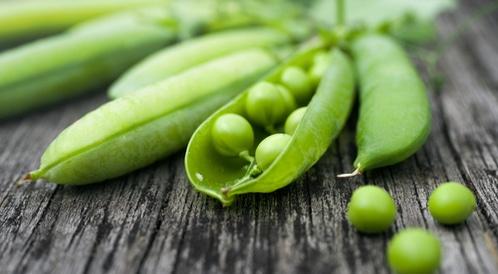 مصادر البروتينات النباتية