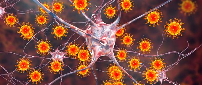 انواع الفيروسات التي تصيب الإنسان