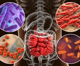 الالتهابات التي تصيب الانسان
