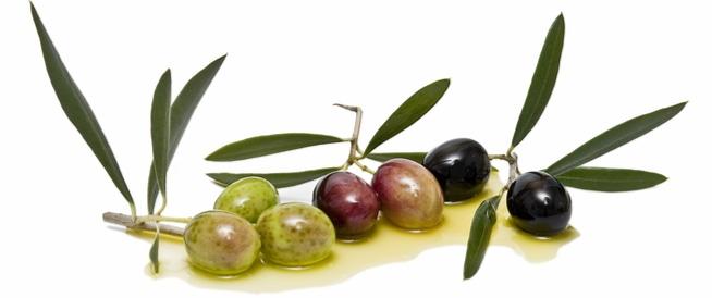 فوائد ورق الزيتون: كنز صحي آخر من شجر الزيتون!