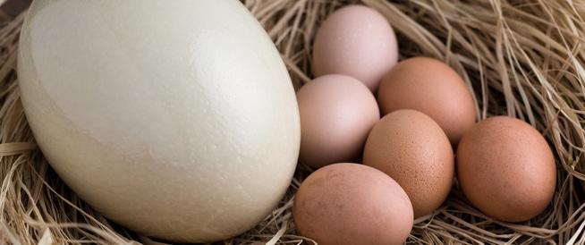 بيض النعام: فوائد وقيمة غذائية هائلة!