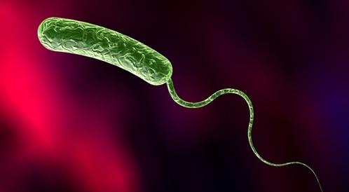 مرض الكوليرا