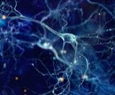 الهرمونات وكيف تعمل