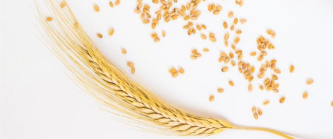 فوائد القمح: أكثر مما قد تتخيل!