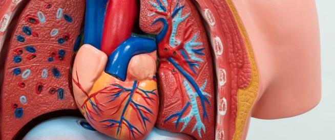 ضعف عضلة القلب كل ما يخصها ويب طب