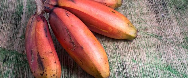 الموز الأحمر: ما هي فوائده؟