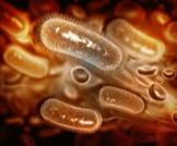 الجرثومة الحلزونية