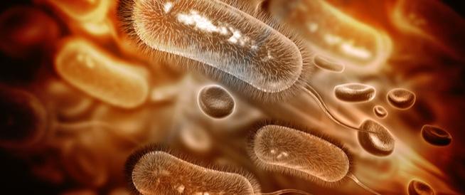 ما هي أعراض الجرثومة الحلزونية؟